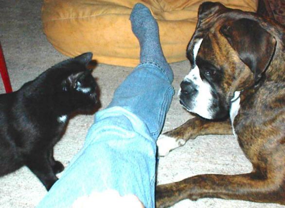 Katzen kennenlernen